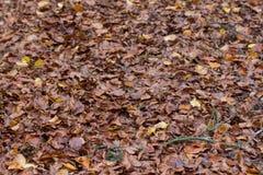 Bosque en caída Imagen de archivo libre de regalías