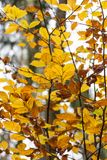 Bosque en caída Foto de archivo libre de regalías
