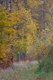 Bosque en caída Fotos de archivo libres de regalías
