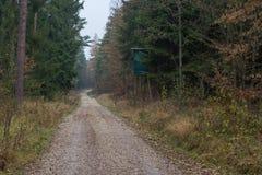 Bosque en caída Imágenes de archivo libres de regalías