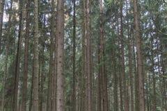 Bosque en caída Fotografía de archivo libre de regalías