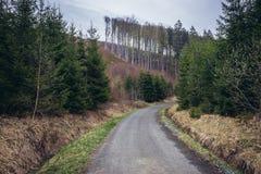 Bosque en Checo Republin Foto de archivo