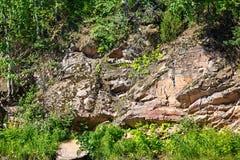 Bosque en cuesta de montaña Imagenes de archivo