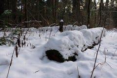 Bosque en día de invierno frío Fotos de archivo libres de regalías