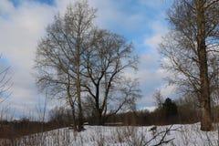 Bosque en día de invierno frío Fotografía de archivo libre de regalías