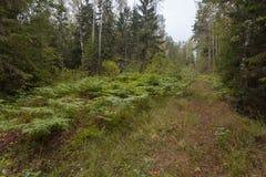 Bosque en día de verano nublado Fotografía de archivo