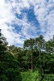 Bosque en día nublado foto de archivo libre de regalías