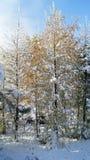Bosque en detalles del invierno Foto de archivo