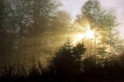 Bosque en el amanecer fotografía de archivo