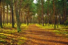 Bosque en el amanecer  Imagen de archivo libre de regalías