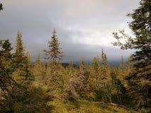 Bosque en el desierto de Laponia Imagen de archivo