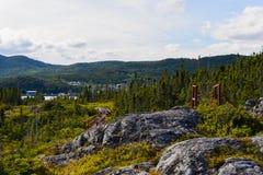 Bosque en el Gros Morne Fotografía de archivo