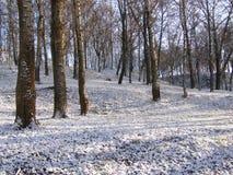 Bosque en el invierno Foto de archivo