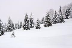 Bosque en el invierno Imagen de archivo libre de regalías