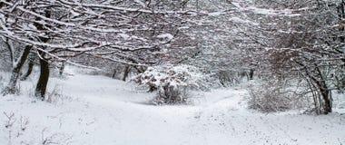 Bosque en el invierno - panorama Imagenes de archivo