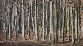 Bosque en el jardín del castillo, Alnarp Foto de archivo