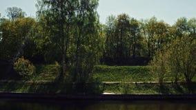 Bosque en el lado del canal de Moscú metrajes