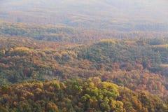 Bosque en el otoño fotos de archivo libres de regalías
