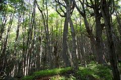 Bosque en el parque nacional de Torres del Paine, Patagonia chilena, Chile Imagen de archivo libre de regalías