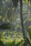 Bosque en el parque natural de Tayrona Fotos de archivo libres de regalías