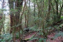 Bosque en el top de la montaña Imagen de archivo