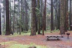 Bosque en el valle de Yosemite imagen de archivo