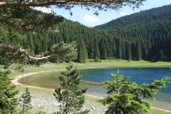 Bosque en el verano Imagen de archivo