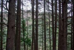 Bosque en Francia Fotos de archivo libres de regalías