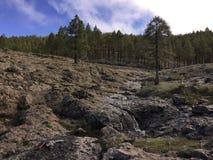 Bosque en Gran Canaria, España Imagen de archivo libre de regalías