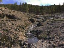 Bosque en Gran Canaria, España Imagenes de archivo