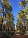 Bosque en Gran Canaria, España Fotos de archivo libres de regalías