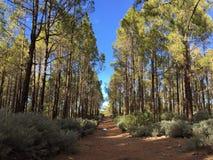 Bosque en Gran Canaria, España Imágenes de archivo libres de regalías