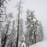 Bosque en invierno Fotos de archivo libres de regalías