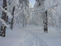 Bosque en invierno Foto de archivo