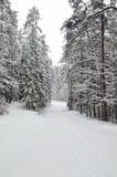 Bosque en invierno imagen de archivo