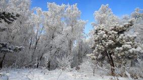 Bosque en invierno almacen de metraje de vídeo