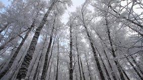 Bosque en invierno metrajes