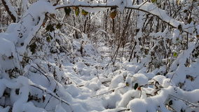 Bosque en invierno Foto de archivo libre de regalías