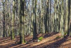 Bosque en invierno con las hojas en colores del verano indio Imagenes de archivo