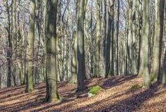 Bosque en invierno con las hojas en colores del verano indio Imagen de archivo libre de regalías