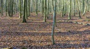 Bosque en invierno con las hojas en colores del verano indio Fotografía de archivo