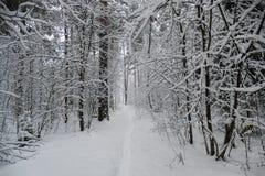 Bosque en invierno con nieve Imagen de archivo