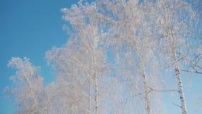 Bosque en invierno Mucha nieve En el primero plano son los tops de los árboles en la helada, árboles sin follaje almacen de video