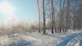 Bosque en invierno Mucha nieve En los árboles del primero plano sin follaje en la helada metrajes