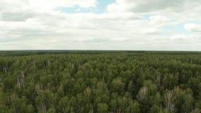 Bosque en la altura del vuelo del pájaro Cantidad aérea almacen de metraje de vídeo