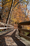 Bosque en la caída Imagenes de archivo