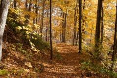 Bosque en la caída Fotos de archivo libres de regalías