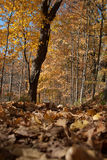 Bosque en la caída Imagen de archivo libre de regalías