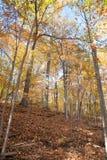 Bosque en la caída Imagen de archivo