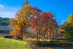Bosque en la caída Fotografía de archivo
